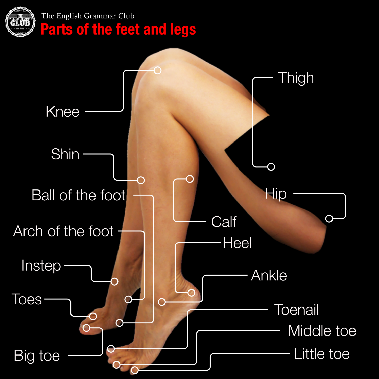 Parts of the feet and legs in English